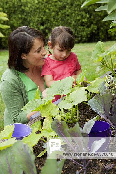 Vereinigte Staaten von Amerika  USA  sehen  Pflanze  Garten  jung  Tochter  Mutter - Mensch  Kalifornien