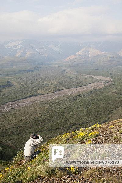 Vereinigte Staaten von Amerika  USA  Senior  Senioren  Mann  Fotografie  Fernverkehrsstraße  Wildblume  Seitenansicht  Denali Nationalpark  Alaska