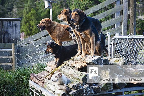 Nationalpark Führung Anleitung führen führt führend arbeiten Bauernhof Hof Höfe Schaf Ovis aries Hund Training Lodge Landhaus blau Ziehbrunnen Brunnen Aufgabe warten Ente neu Neuseeland