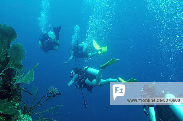 Scuba Divers  Utila Island  Honduras