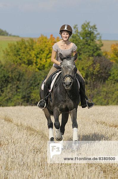 Reiterin galoppiert auf einem Connemara-Pony auf einem Stoppelfeld  Bayern  Deutschland