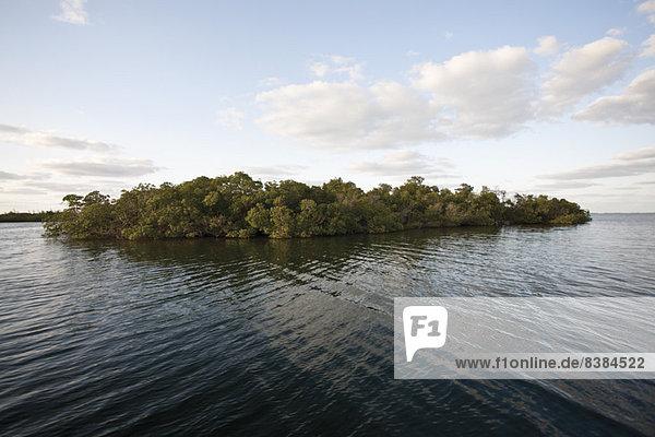 Kleine bewaldete Insel im Wasser