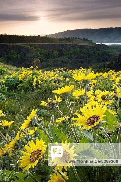 Landschaftlich schön  landschaftlich reizvoll  Fluss  Zimmer  Schlucht  Oregon