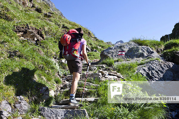 Bergsteiger beim Aufstieg auf den Wilden Freiger  Südtirol  Italien