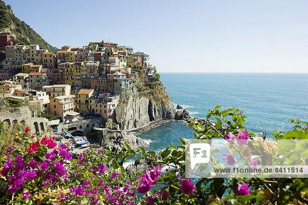 Bougainvillea und Dorf mit bunten Häusern am Meer  Manarola  Cinque Terre  UNESCO-Weltkulturerbe  Provinz La Spezia  Ligurien  Italien