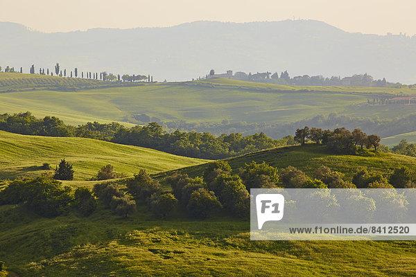 Hügelige Landschaft der Crete Senesi  Castelmuzio  Toskana  Italien