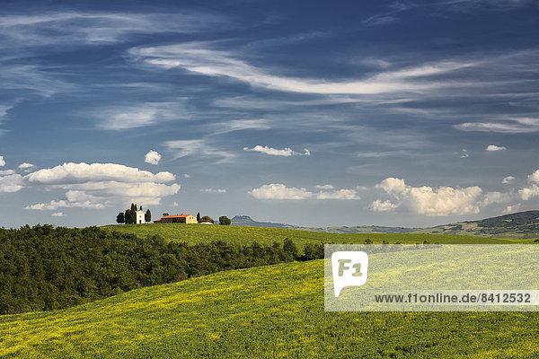Hügelige Landschaft der Crete Senesi  San Quirico d'Orcia  Toskana  Italien