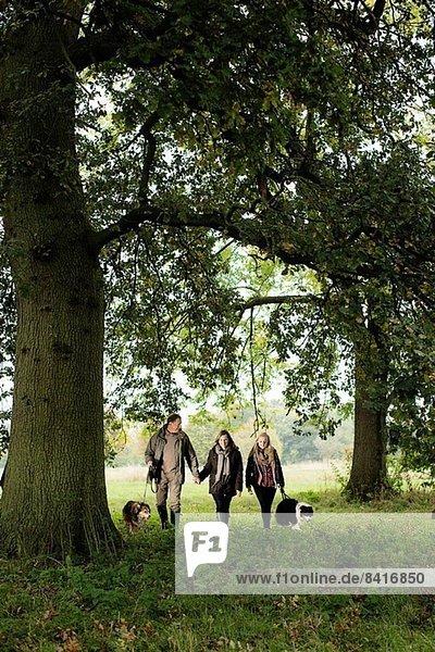 Senior Paar und Enkelin gehende Hunde  Norfolk  UK