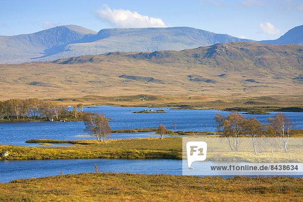 Wasser  Europa  Baum  Großbritannien  See  Herbst  Highlands  Birke  Moor  Schottland