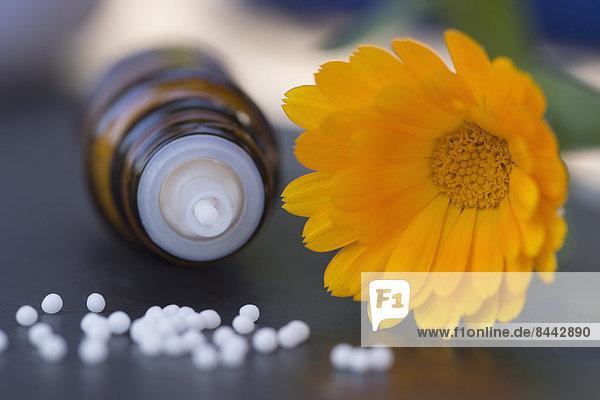 Topf Ringelblume  Medizinflasche und Globuli