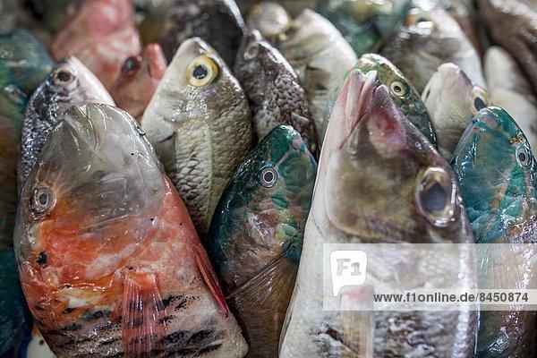 Fisch  Pisces  verkaufen  Südostasien  Asien  Kollektion  Malaysia  Markt  Sabah