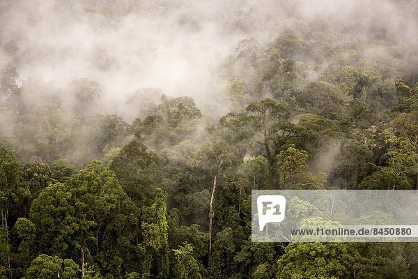 aufwärts  Dunst  Tal  Wald  Regen  Baldachin  Südostasien  Asien  Malaysia  Sabah
