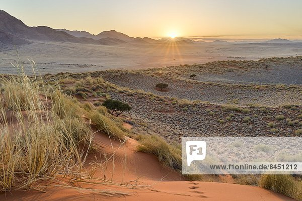Sonnenaufgang  Namibia  Namib  Düne  Afrika