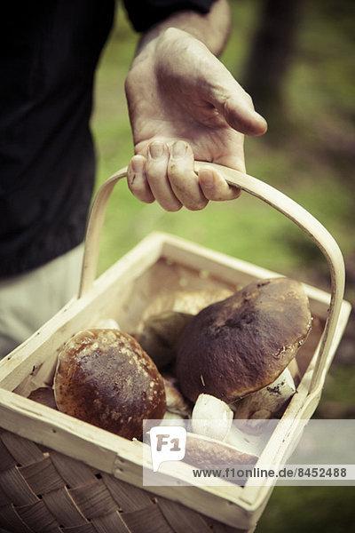 Mittelteil des Mannes  der einen Korb mit Pilzen hält.