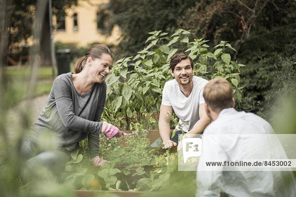Fröhliche Freunde beim gemeinsamen Gärtnern im Freien