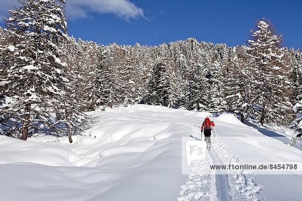 Skitourengeher beim Aufstieg auf den Juribrutto  Fleimstal  Dolomiten  Trentino  Italien