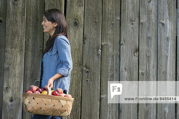 Eine Frau trägt einen Korb mit frisch gepflücktem Obst. Pflaumen und Pfirsiche.