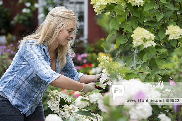 An organic flower plant nursery. A woman working.