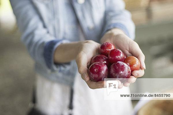 Ein biologischer Obst- und Gemüsebetrieb. Eine Frau hält eine Handvoll frischer Pflaumen.