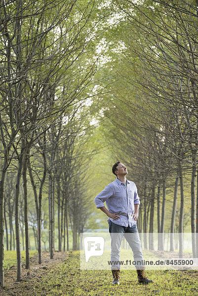 Ein Mann steht in einer Baumallee und schaut nach oben.