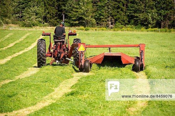 Vereinigte Staaten von Amerika  USA  Mann  schneiden  Traktor  rot  Gras  Maine