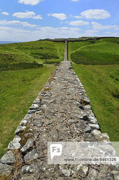 Der Hadrianswall schlängelt sich durch die Landschaft  Housesteads Roman Fort  Haydon Bridge  Hexham  Northumberland  England  Großbritannien