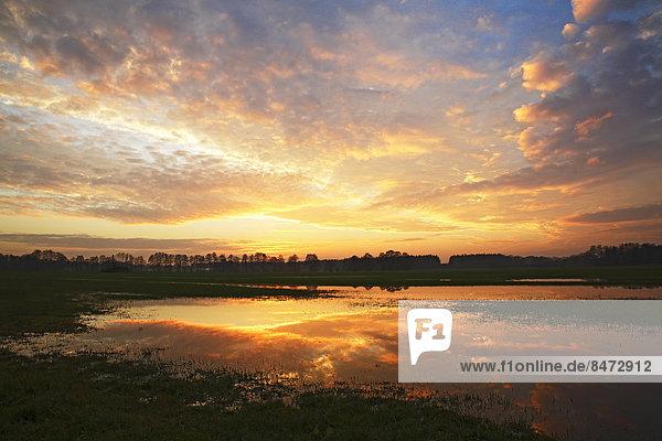 Dramatischer Abendhimmel mit Spiegelung auf überschwemmter Wiese  Naturschutzgebiet Oberalsterniederung  Tangstedt  Schleswig-Holstein  Deutschland