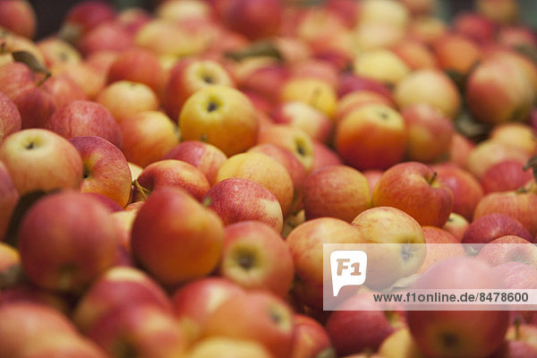 Frisch gepflückten Äpfel