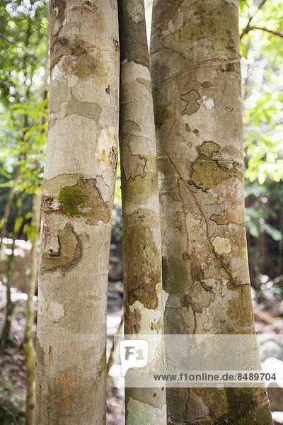 hoch oben nahe Baum Wald Baumstamm Stamm Ko Phangan Thailand