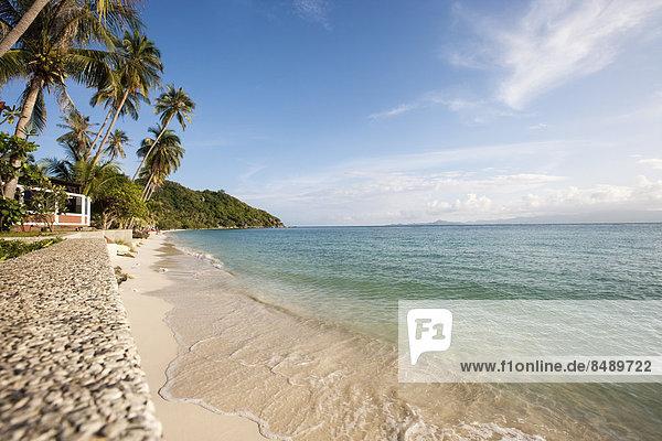 Strand  Baum  Thailand