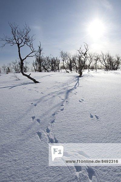 Landschaft  Tier  Kreis  Norwegen  Norden  Arktis  Schnee  Tromso