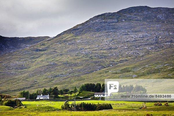 nahe Berg Wohnhaus Jungvogel Connemara County Galway Irland