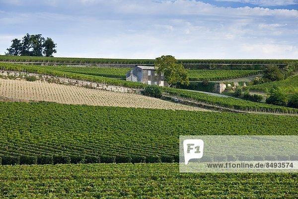 Frankreich  Wein  Weinberg  Geographie  Bordeaux