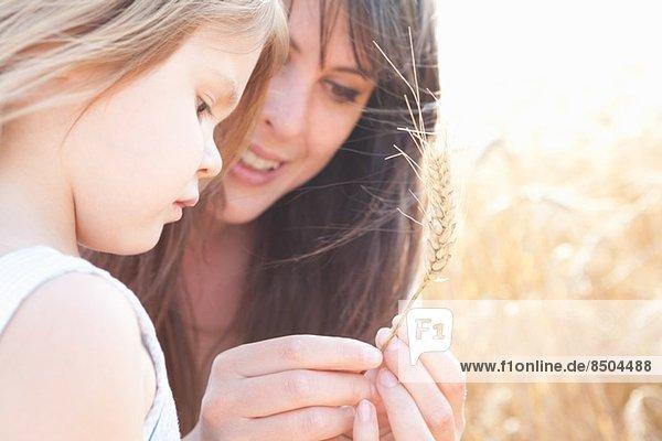 Mutter und Tochter betrachten Weizenkorn