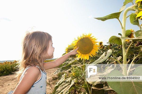Mädchen zeigt auf Sonnenblume Mädchen zeigt auf Sonnenblume