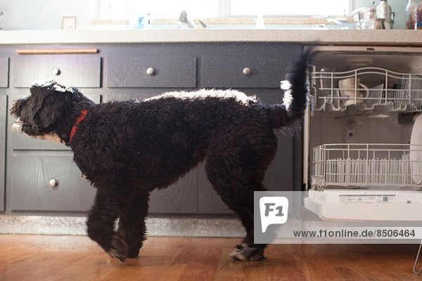 Süßer Hund in der Küche