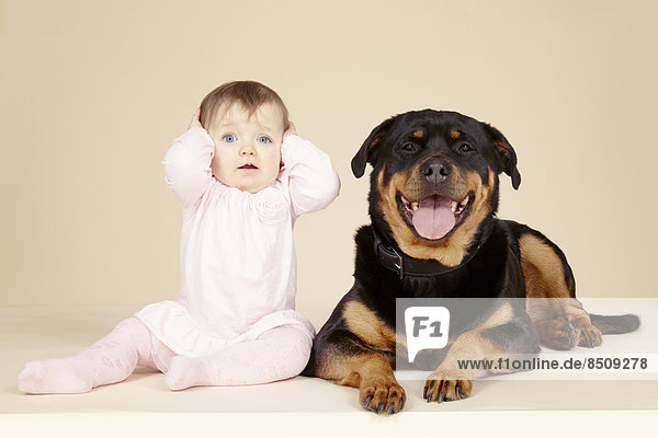 Studio portrait of Rottweiler dog and baby girl with hands over ears