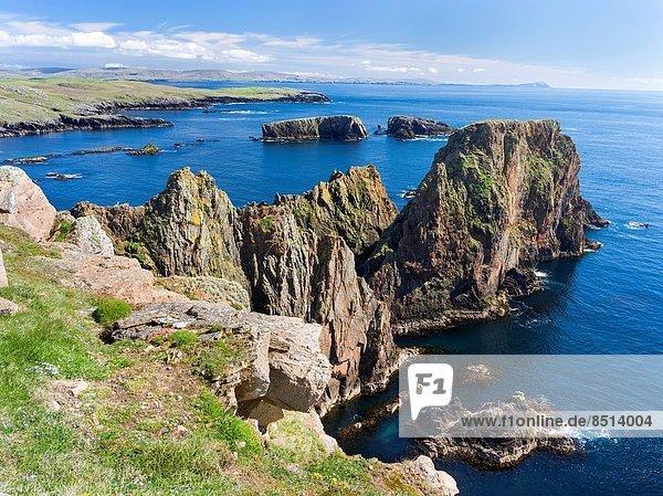 zwischen  inmitten  mitten  Europa  Großbritannien  Steilküste  Hintergrund  Shetlandinseln  Mai  Schottland  Süden