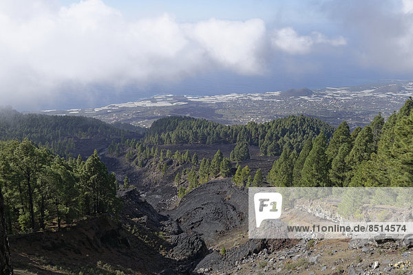 Lava flow from 1949  Coladas de San Juan  Cumbre Vieja  La Palma  Canary Islands  Spain