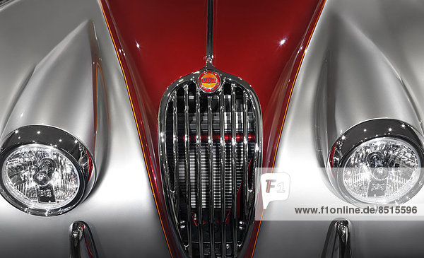 Jaguar  Panthera onca  Tradition  Auto  Retro  frontal  Grill  Klassisches Konzert  Klassik  Jaguar