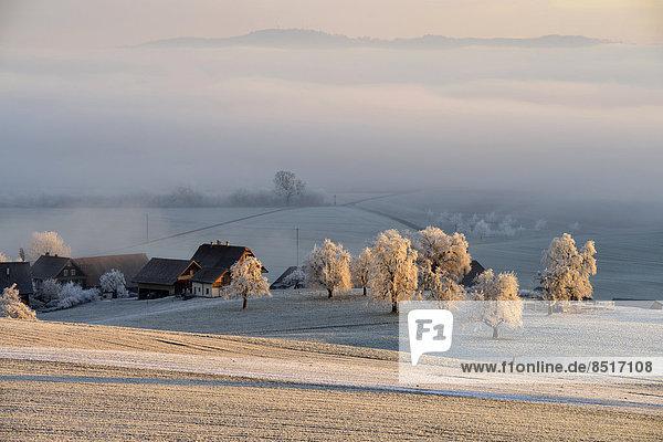 Baum Frucht Landschaft Bauernhof Hof Höfe Winter Frost Schweiz