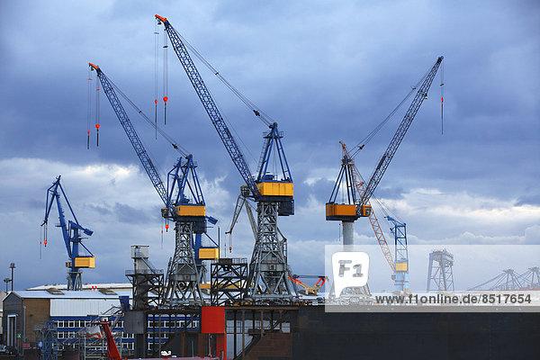 Kräne auf einem Dock der Schiffswerft Blohm + Voss im Abendlicht  Hamburger Hafen  Hamburg  Deutschland