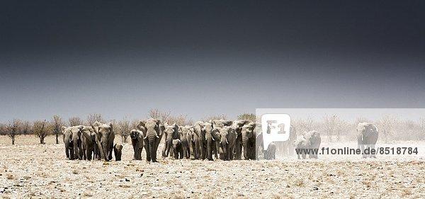 Elefant  Namibia Elefant ,Namibia
