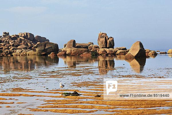 Frankreich  Bretagne  Tregastel  Granitküste