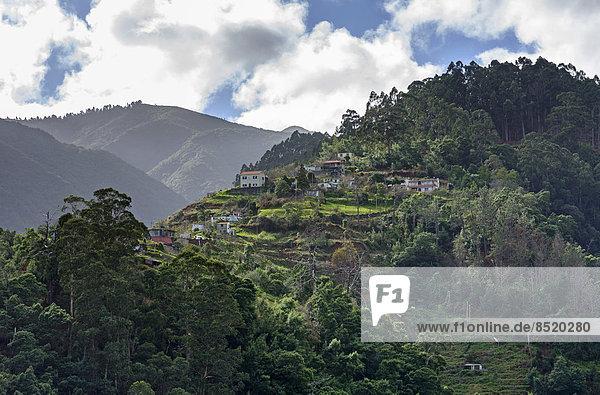 Portugal  Madeira  Berg bei Santana