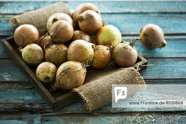 Zwiebeln auf Tablett  Studioaufnahme