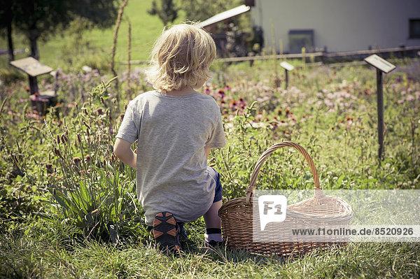 Italien  Bozen  kleiner Junge kniend im Kräutergarten