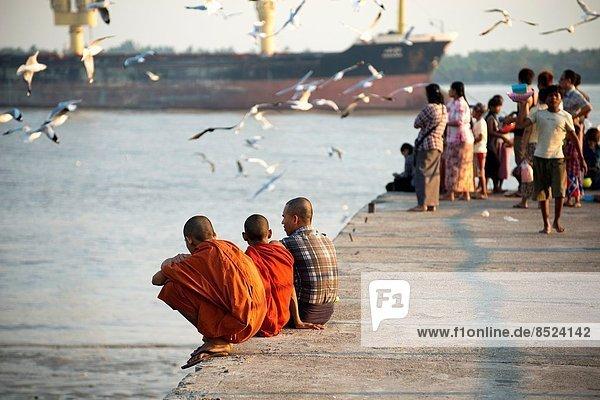 sehen  Fluss  Kai  Möwe  Myanmar  Mönch