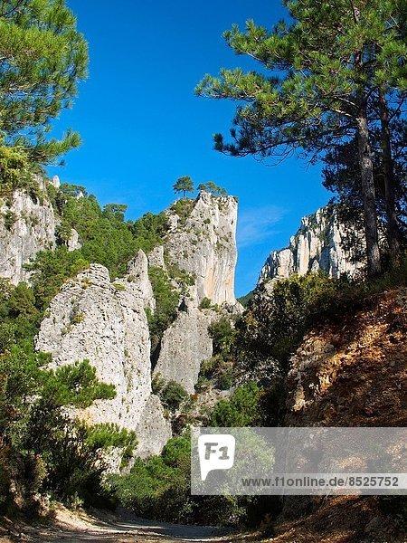 Naturschutzgebiet Felsbrocken Hafen Landschaft folgen Baum Anordnung wandern Kiefer Pinus sylvestris Kiefern Föhren Pinie vorwärts Geographie Katalonien Ortsteil Kalkstein Spanien Tarragona