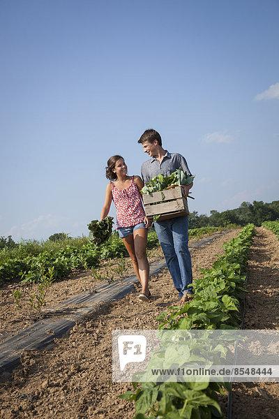 Frische Junge - Person Gemüse halten groß großes großer große großen Holzkiste